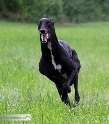 TaminoCoursing